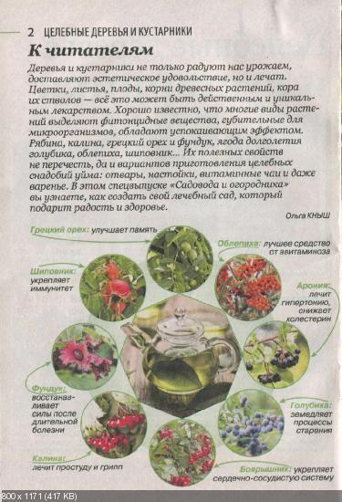 Садовод и огородник. Спецвыпуск №4 (декабрь 2015)